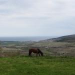 Недвижимость в Болгарии в селе